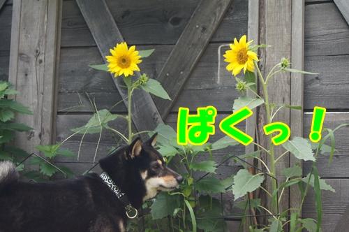 20130811-024.jpg