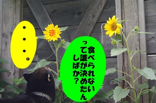 20130811-028.jpg