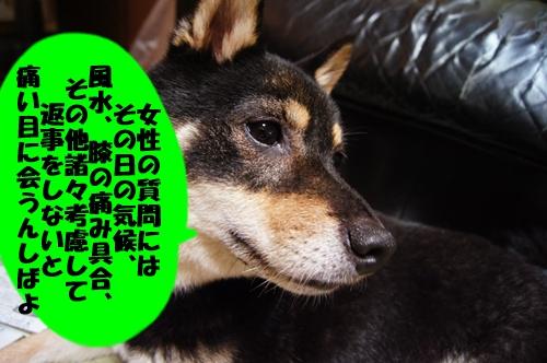 20130817-009.jpg