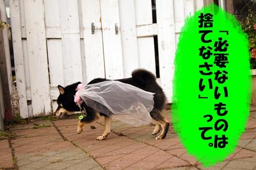 20131116-052-.jpg
