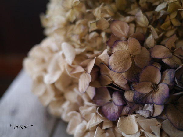 のかふぇ 紫陽花