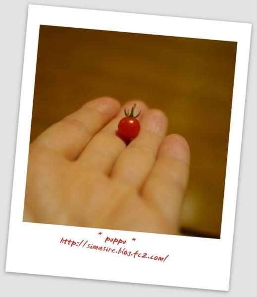 マイクロトマト ②