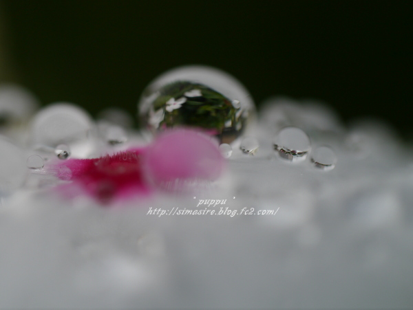 水晶の中の日々草