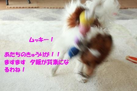 IMG_8935.jpg