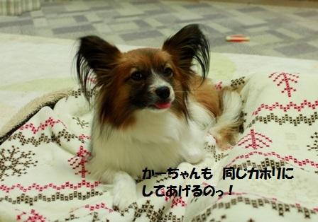 _MG_1009.jpg