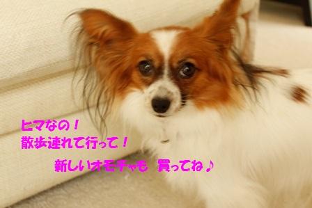 _MG_9720.jpg