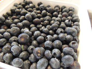 blueberry4.jpg