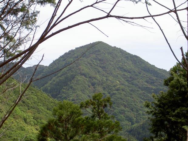 シャクナゲが自生する山