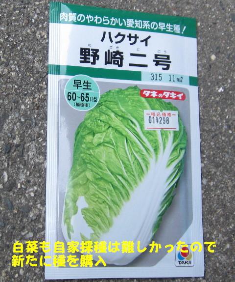 秋冬野菜種蒔きⅠ (2)