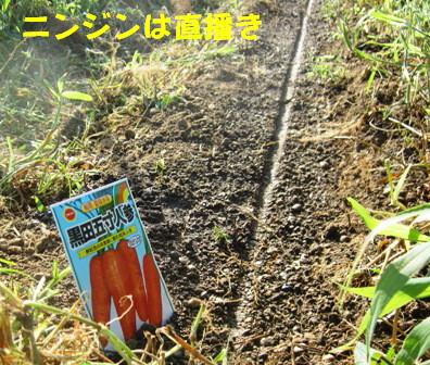 秋冬野菜種蒔きⅠ (4)