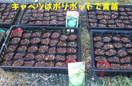 秋冬野菜種蒔きⅠ (1)