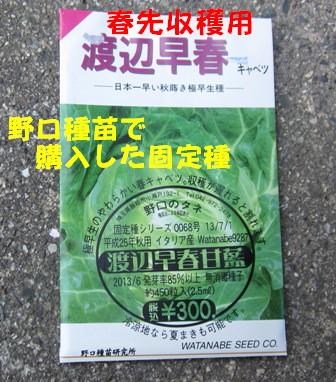 秋冬野菜種蒔きⅠ (3)