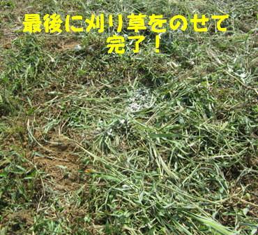 秋ジャガ植え付け順 (6)