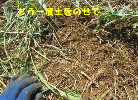 秋ジャガ植え付け順 (5)