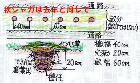 秋ジャガ植え付け順 (1)