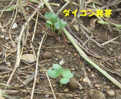 夏野菜から秋冬野菜へ (2)