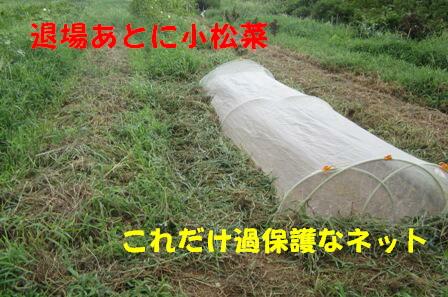夏野菜から秋冬野菜へ (3)