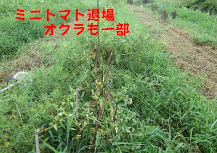夏野菜から秋冬野菜へ (1)