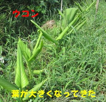 発芽生長中 (6)