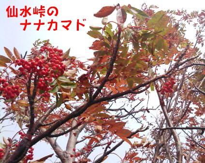 紅葉 (2)