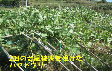 26号台風の吹き返し (4)
