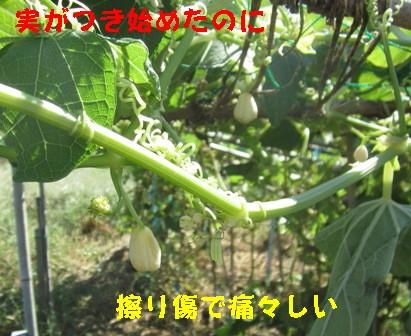 26号台風の吹き返し (5)