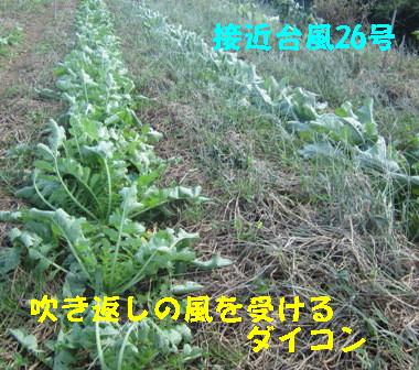 26号台風の吹き返し (2)