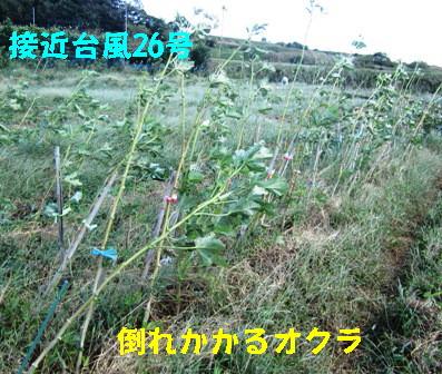 26号台風の吹き返し (3)