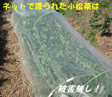 26号台風の吹き返し (7)