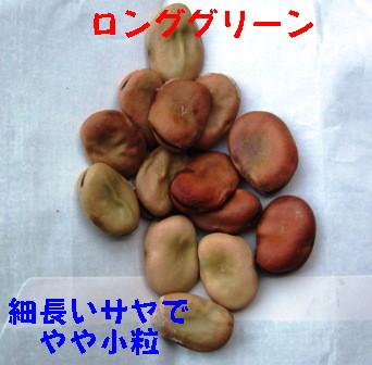 空豆3種 (3)