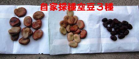 空豆3種 (1)