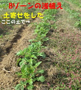 2013年秋ジャガイモ (4)