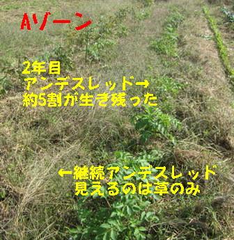 2013年秋ジャガイモ (1)