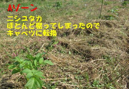 2013年秋ジャガイモ (2)