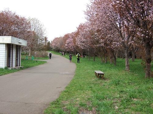 前田森林公園の桜