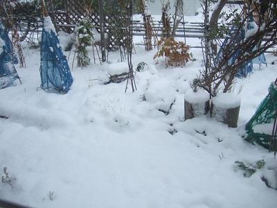 ついに雪が