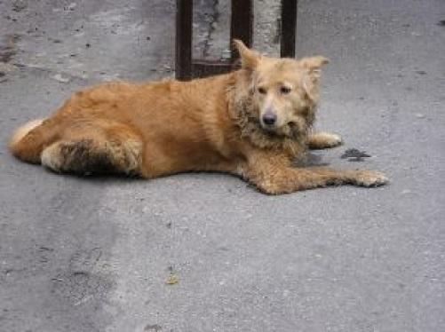 homeless-dog_2830110.jpg
