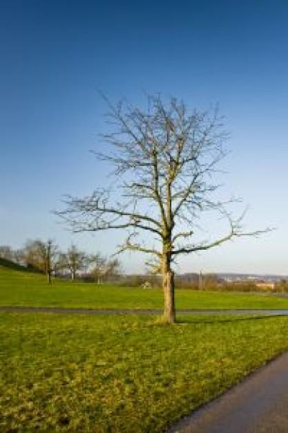 naked-tree-in-winter_21150531.jpg