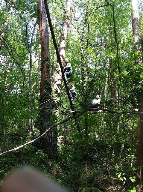 その後に木は倒れた