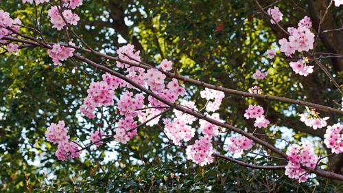 桜を思い出して・・・
