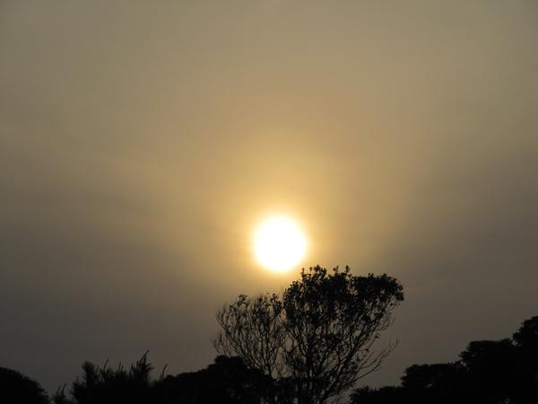 木の上にかかる太陽
