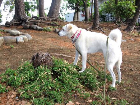 探索中の犬