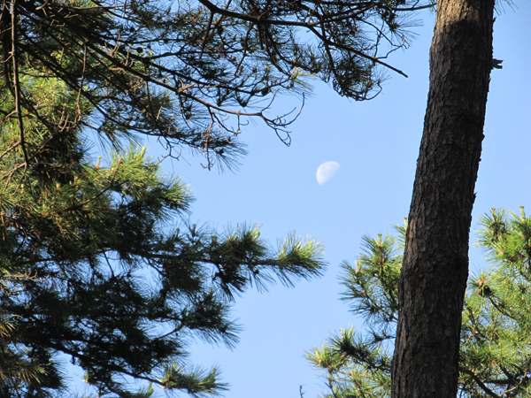 朝の散歩で月を