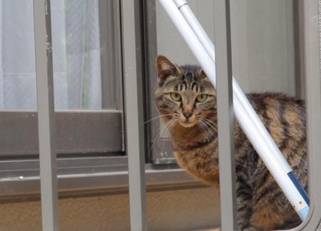 近所で見つけた猫