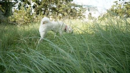 草の中で遊ぶ