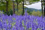 紫のお花・・・