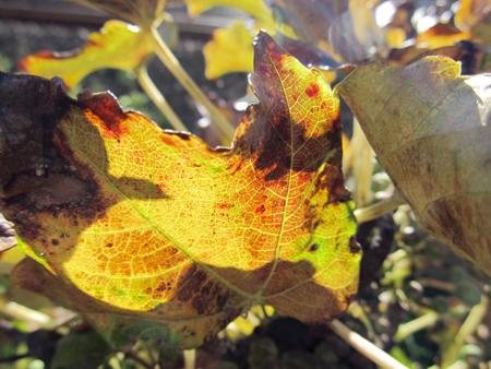 秋ですね2
