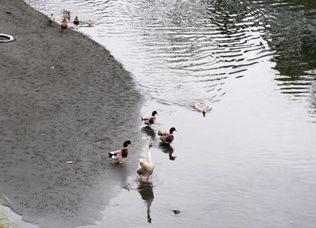 水鳥が集まってきた。