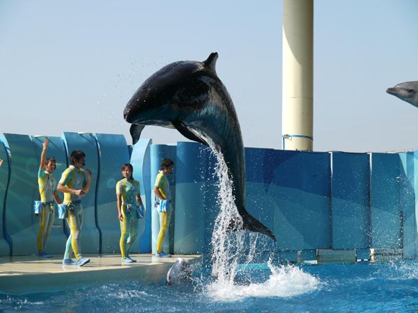 イルカが飛んでます。