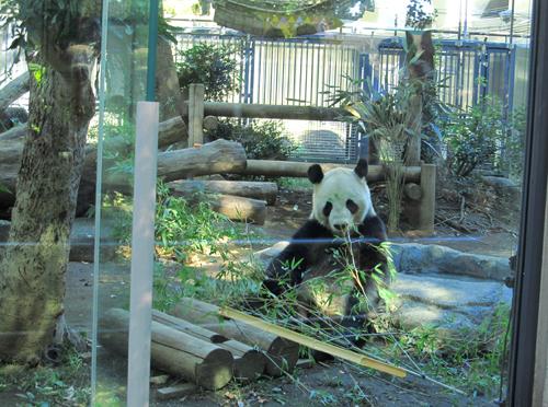 お食事中のパンダ